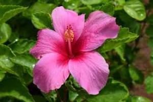 Bagian Bagian Bunga Sempurna